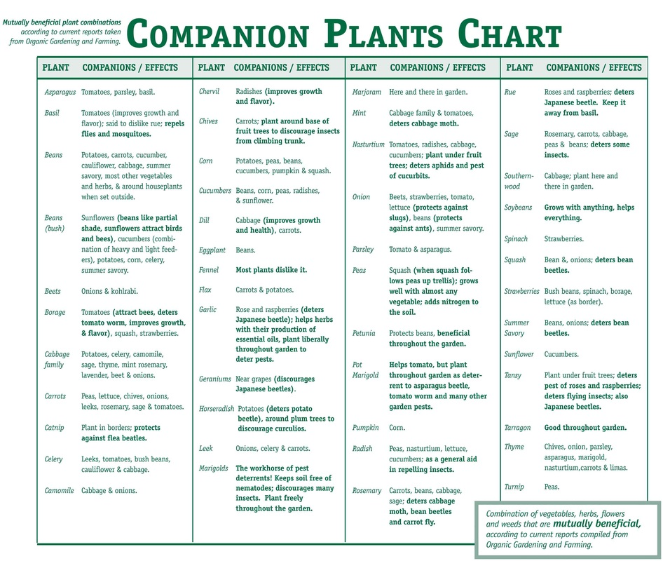 Companion planting fines herbes - Companion planting ...